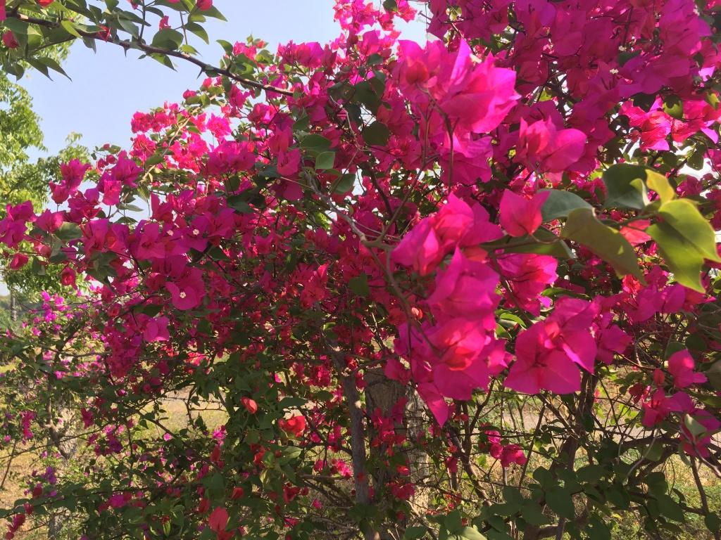 ashok tree retreat yoga nature flowers tiruvannamalai india